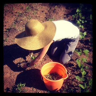 May 26 : fave thing to do on Sunday -- weeding!! Rocking out in a J.Lo wide-brimmed hat! #fmsphotoaday #gardening #thisishowweroll