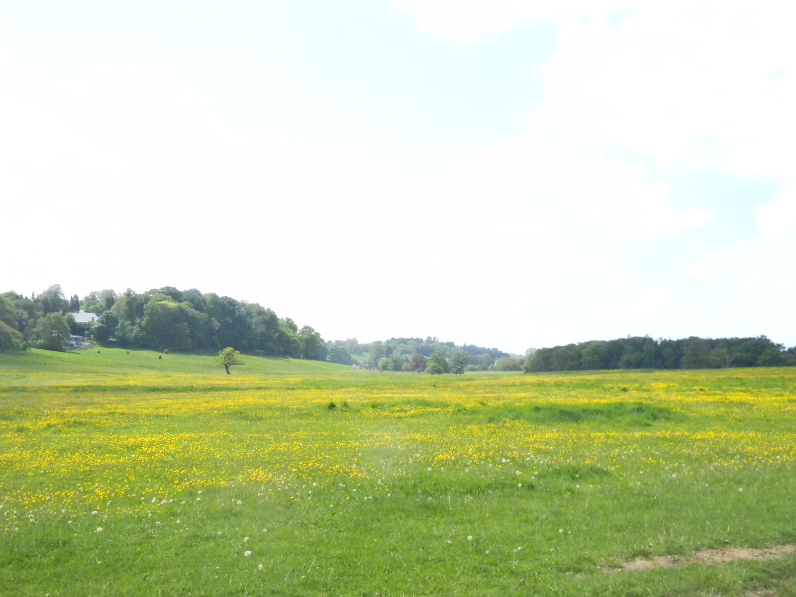 Buttercups, Bulstrode Park Gerrards Cross to Cookham