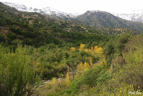 chile santiago naturaleza nature río forest river bosque provincia pirque reservanacional elprincipal conaf ríoclarillo esclerófilo