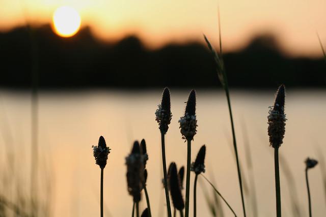 Sunset By The Lake by Kieron Adams