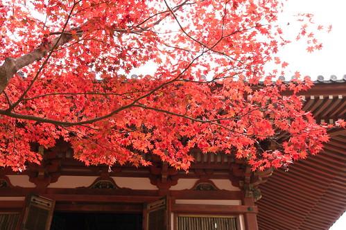 【写真】2012 紅葉 : 醍醐寺/2020-08-07/IMGP6856