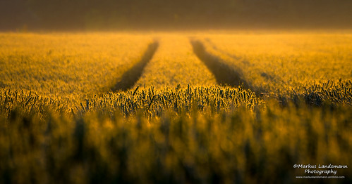 Morning line by Markus Landsmann