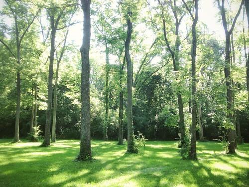 perfect grove