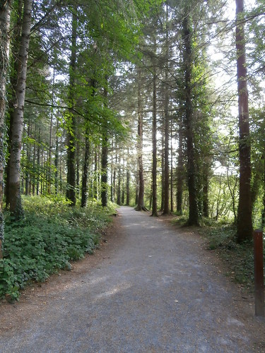 Dundrum Woods 10