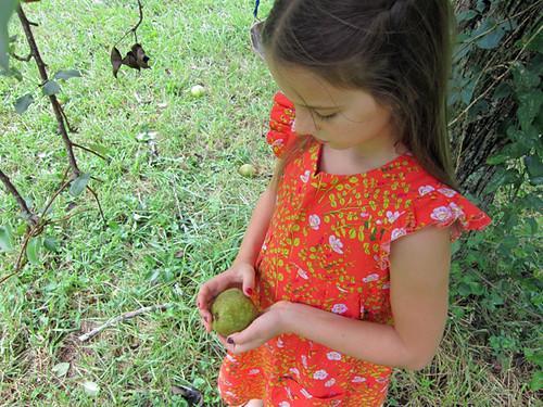 Aria's pear tree