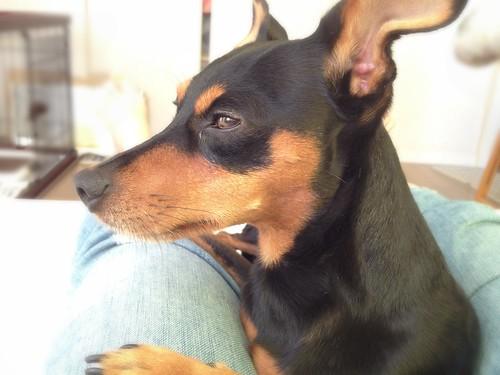 まったりな表情の黒犬