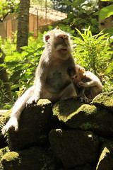 Monkey Forest of Ubud