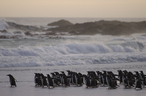 Falklands by richard.mcmanus.