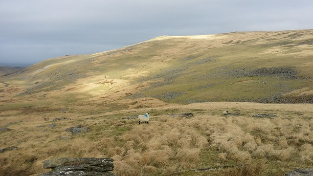 Sunshine on Fordsland Ledge from Lints Tor