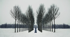 A line of trees