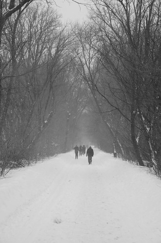 blackandwhite bw snow monochrome arlington path explore minutemantrail minutemanbikeway pathscaminhos ysplixblack