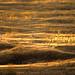 campos de seda by carlos jm