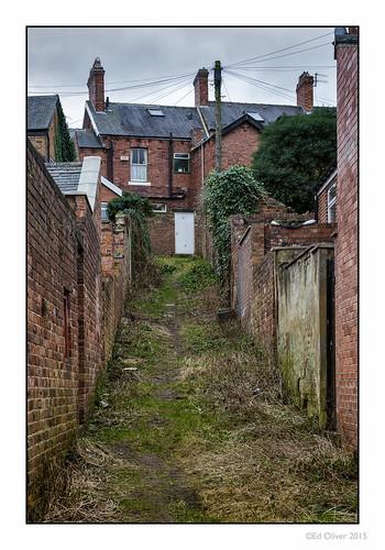 uk houses overgrown backalley durham grim ivy overcast dull newcastleupontyne depressing tyneandwear terracedhouses canonef70200mmf28lisii newcastleupontynenortheast