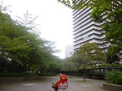 Talonflame in Higashi-ojima, Tokyo 29 (Ojima Komatsugawa park)