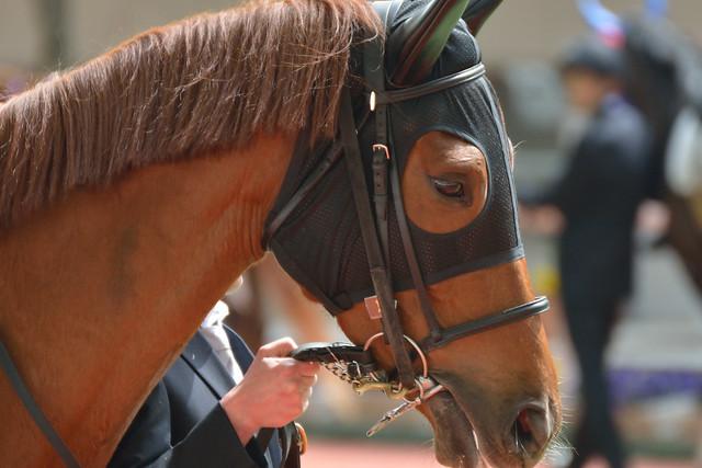 サラブレッドの目を撮りたくてGⅠレースが開催されない日の阪神競馬場へ行ってみました