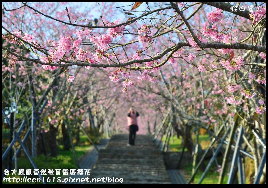 台大鳳凰自然教育園區櫻花DSC_5906