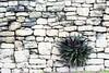 Mayan wall by photogreuhphies