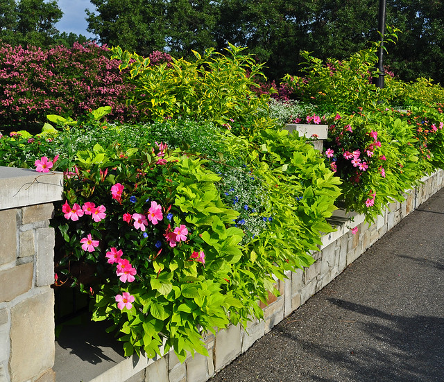 Rose Garden Bridge (4)