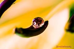 marblelous water drop