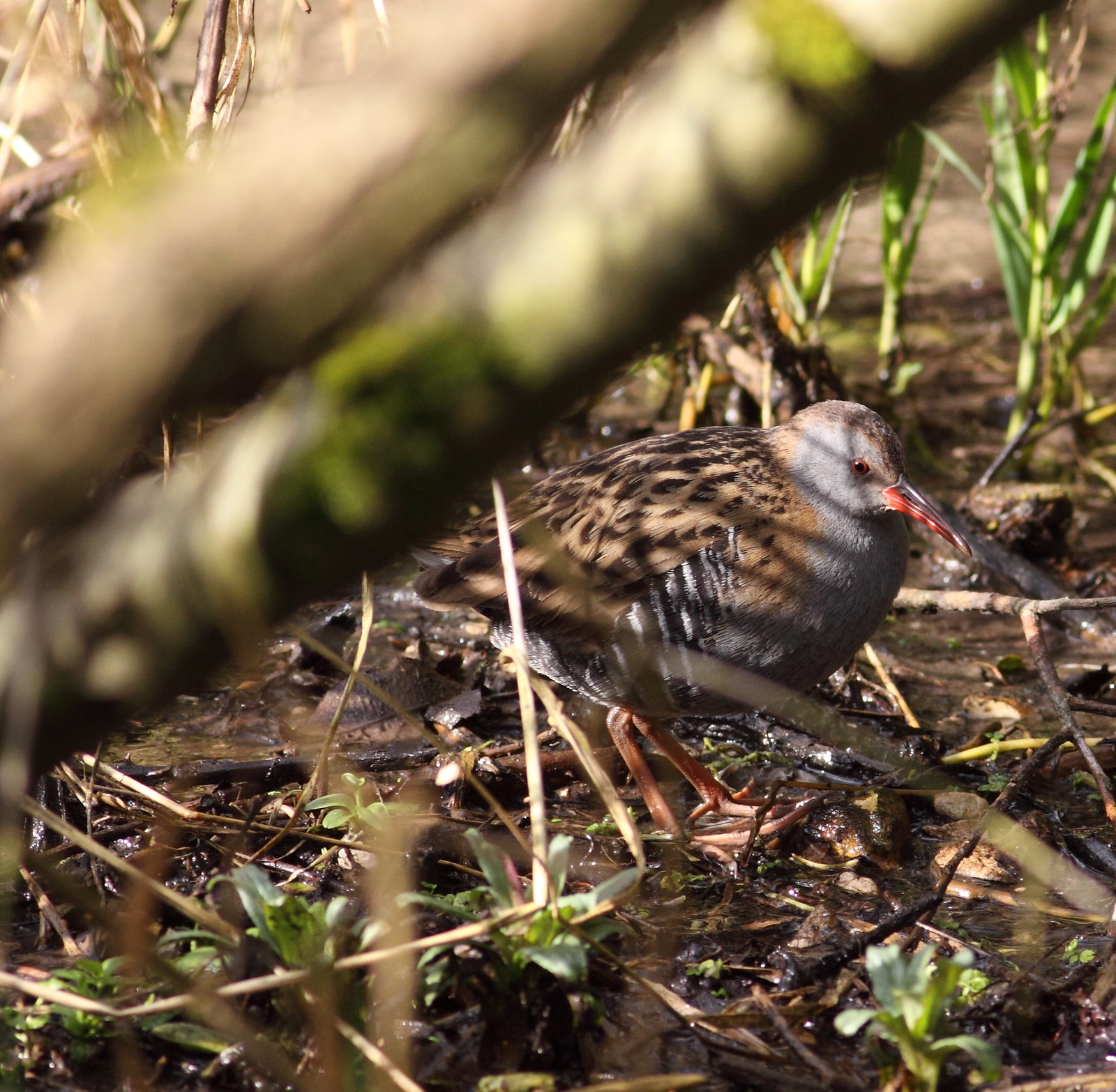 ajsteele-waterrail-watercressbeds-020215
