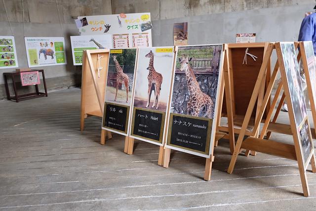 150320家族で日本平動物園 282 1
