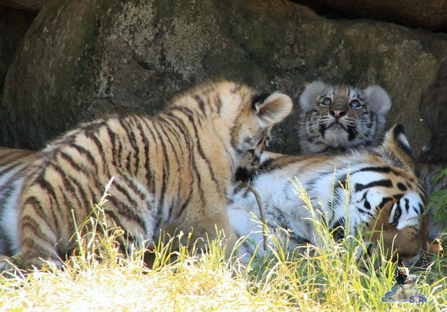 Zoo Eberswalde 04.06.2011 144