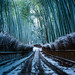 the path of bamboo, revisited #34 (Sagano, Kyoto) by Marser