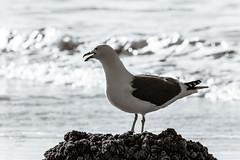 Haystack Rock - Cannon Beach