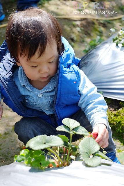 劉正男高冷草莓園  (38)