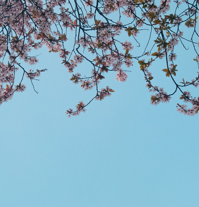 standing underneath blossom tree