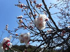 Φωτογραφίες από την φετινή Άνοιξη τον μήνα Μάρτιο στη Ψίνθο