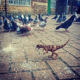 Gorm decided to feed the birds on his way to work this morning. #dinosaursalive #dinosaurs #dinosaur #dinosaursintheiffice #dinosaursaspets #housedinosaur