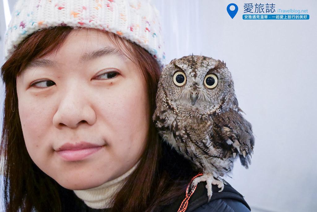 《大阪景点推荐》OWL Family 猫头鹰咖啡厅:萌度百分百,一小时的近距离亲密接触。
