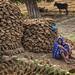 RAMNAGAR : FEMME À LABRI DES BOUSES