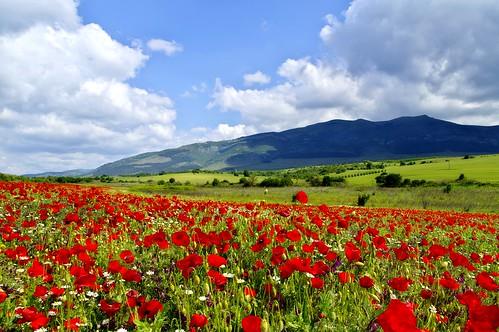 flowers sky mountain field clouds landscape outdoor bulgaria poppy