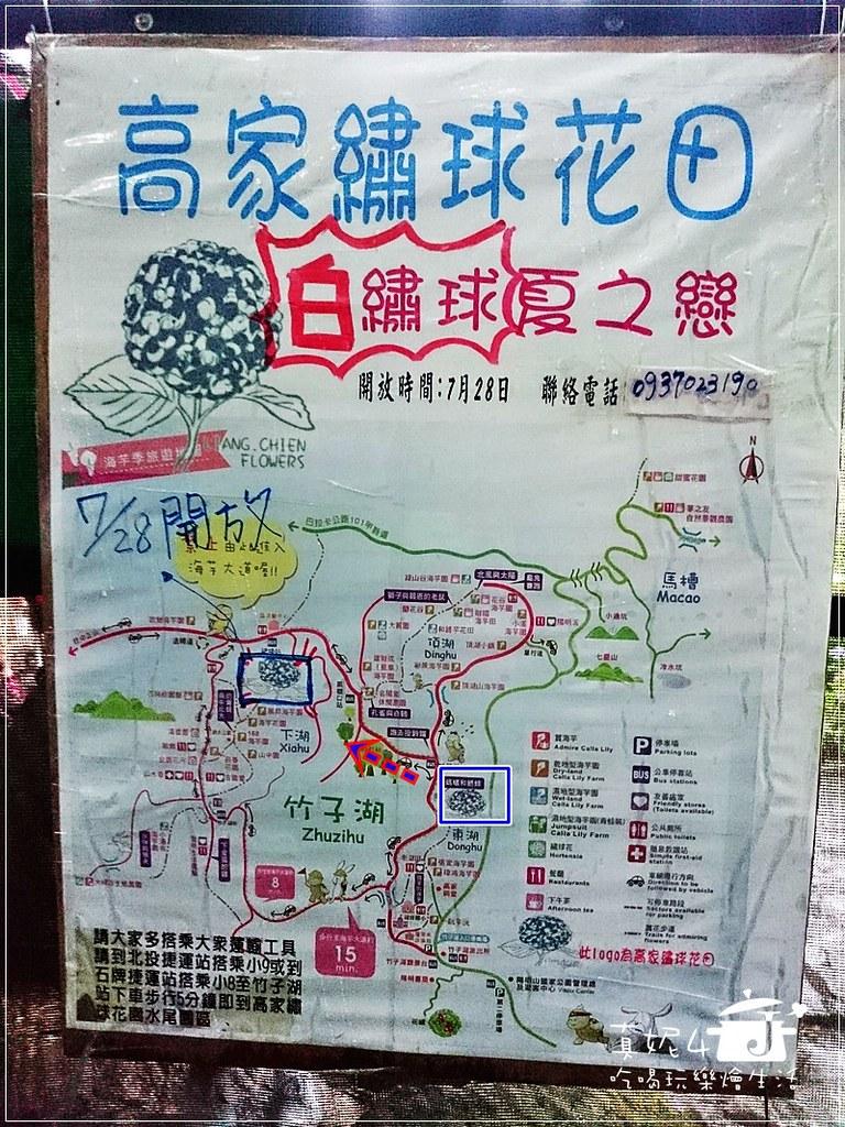 陽明山 福田橋 繡球花