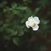 Beauty in bloom by Tammy Schild