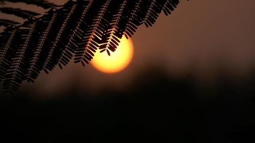 sunset sun leaves bangladesh chittagong