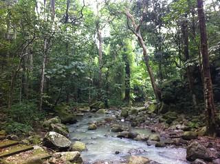 Image of Makiling Botanic Gardens. mountain river laguna losbaños makiling
