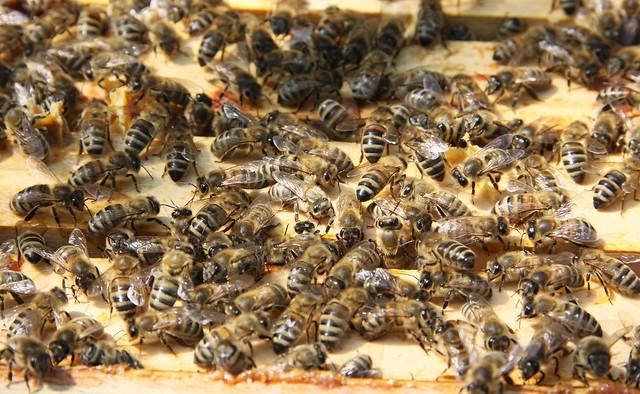 Fleißige Bienchen