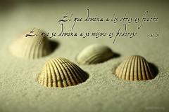el_que_domina_a_los_otros