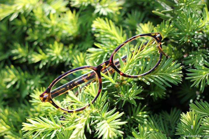 pine and tortoiseshell