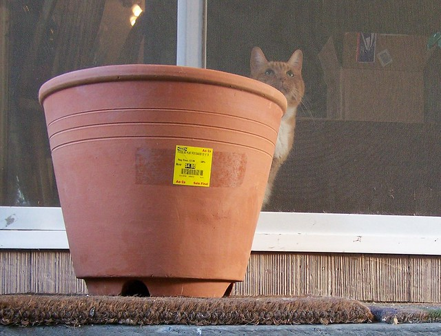 half price clay pot and potential occupant