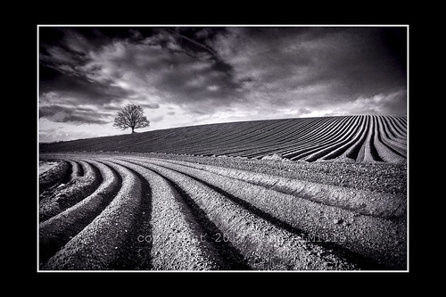 road county ireland blackandwhite bw tree field mono nikon down lone northern 80 tamron furrows ploughed 1024 autofocus d90 comber greatphotographers theworldwelivein ostrellina alwaysexc mygearandme mygearandmepremium mygearandmebronze mygearandmesilver mygearandmegold mygearandmeplatinum mygearandmediamond ringexcellence greaterphotographers sunofgodphotographer dblringexcellence greatestphotographers tplringexcellence ultimatephotographers skancheli photographyforrecreationeliteclub eltringexcellence ballyrainey celebritiesofphotographyforrecreation photographyforrecreationclassic frameitlevel1 frameitlevel2 poty2014 infinitexposure