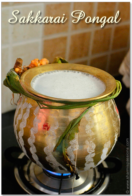 Sakkarai Pongal cooking in traditional pot