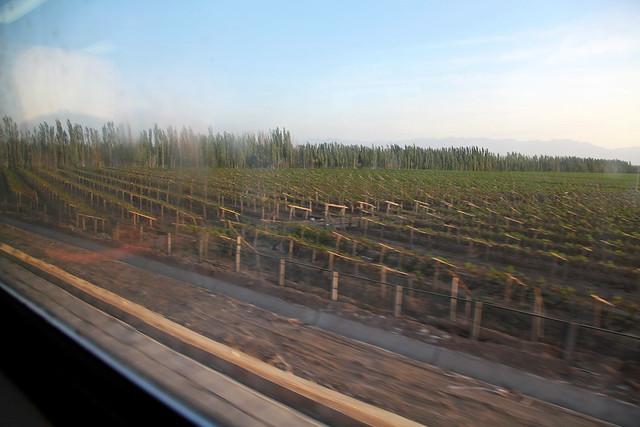 Grape trees field from the train window, near Hami 列車から見たハミ近郊のブドウ畑