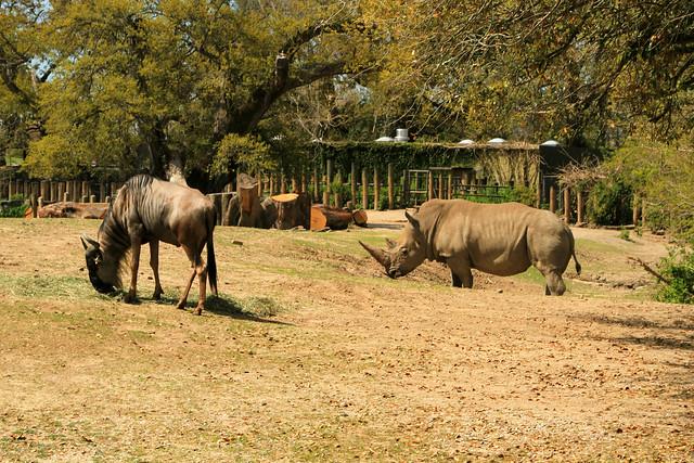 African Savanna Exhibit