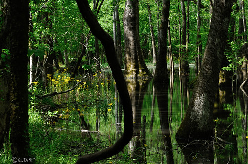 forest swamps swamp forests tupelogum mygearandme tupelogumswamp