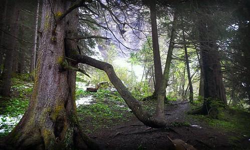 Curvy tree branch by marcopolis