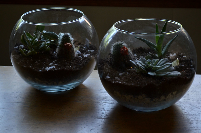DIY Glass Terrarium 1
